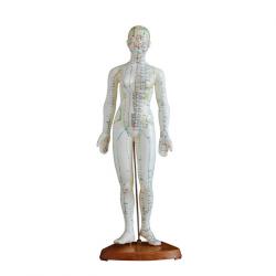 الوخز بالإبر الإنسان نموذج 48 سم أنثى