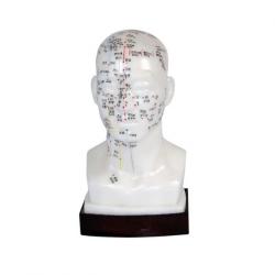 نموذج الوخز بالإبر في الرأس